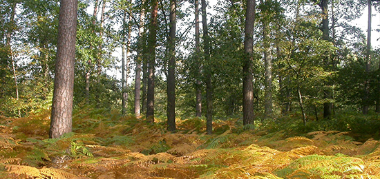Séminaire «Construction des paysages forestiers et littoraux, usages et pratiques cynégétiques»