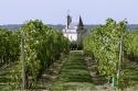 Vignoble Et La Tour De L'horloge De La Forteresse Royale De Chinon