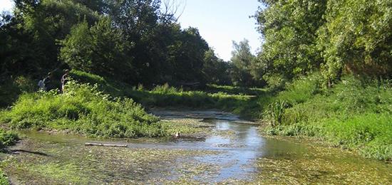 [RETOUR SUR] Séminaire « La biodiversité alluviale du bassin versant de la Loire »